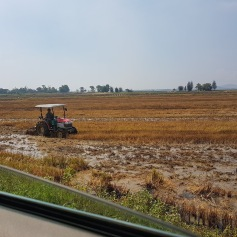 Plowing the fields