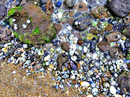 Dazzling colours of the seashells
