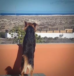 Rocky surveying his domain