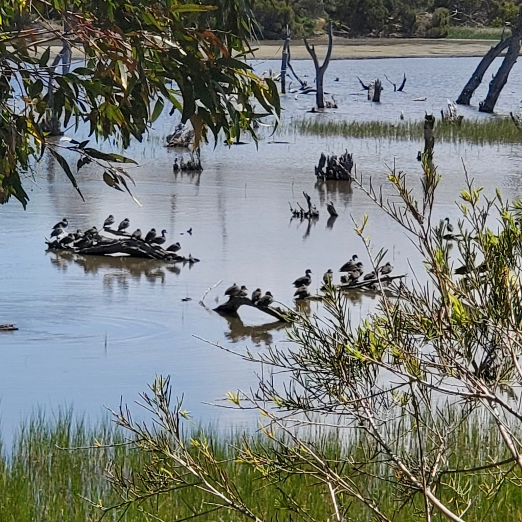 Lake Claremont, Perth, Western Australia
