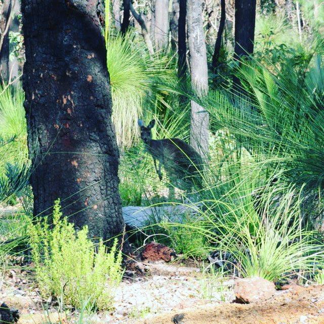 Yallingup, South West Australia